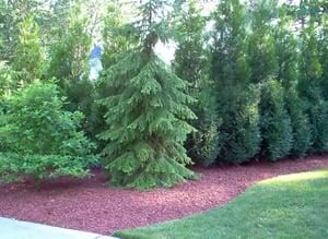 benefits-of-mulch