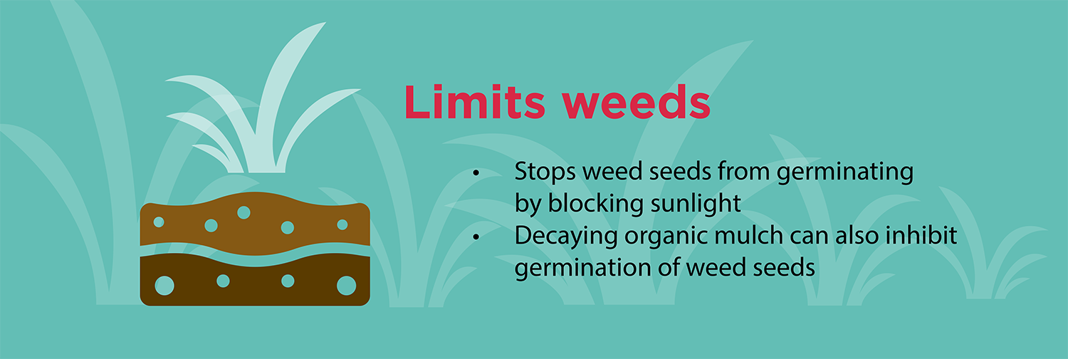 limits-weeds